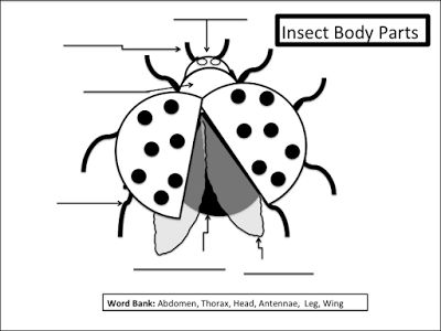 Free download from my blog. Kids love ladybugs! www