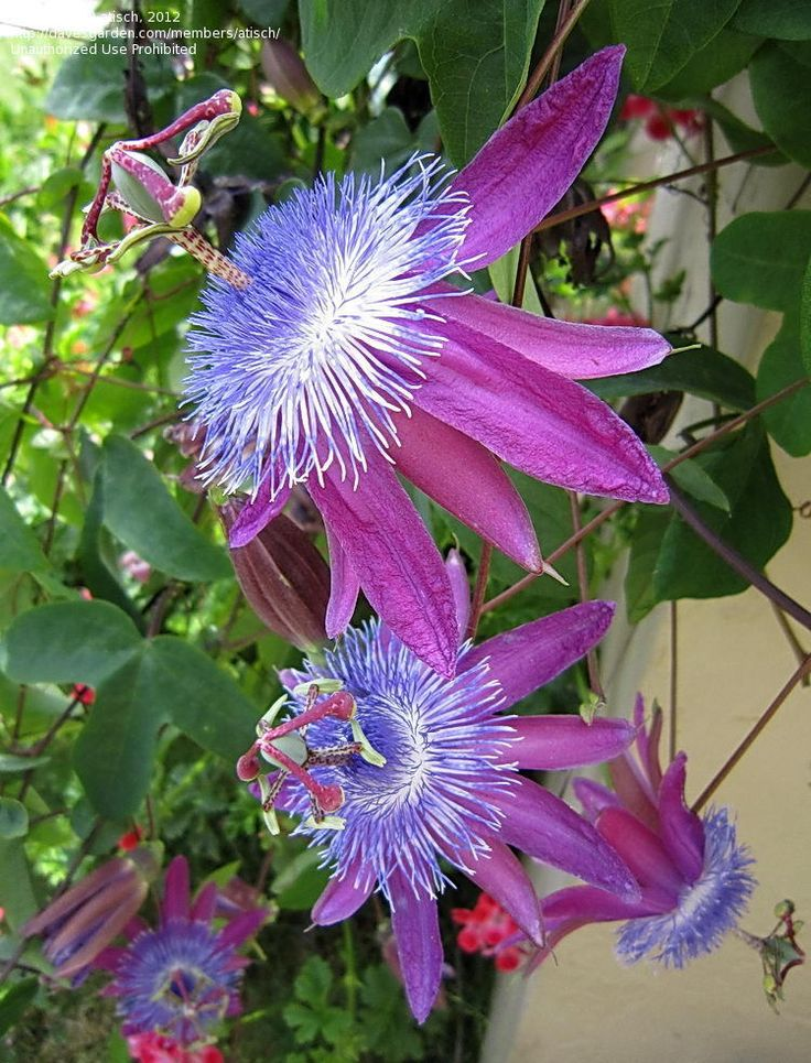 best  pictures of flowers ideas on   beautiful, Natural flower