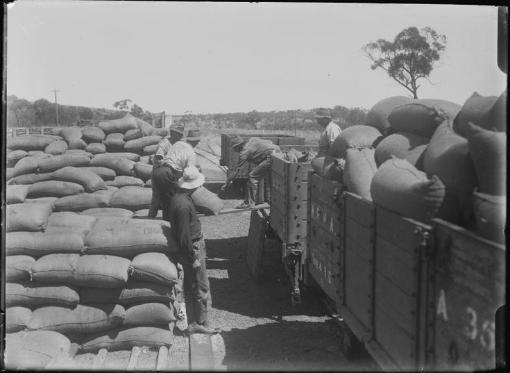 008326PD: Trucking wheat at Yandanooka, 1916  https://encore.slwa.wa.gov.au/iii/encore/record/C__Rb2940781
