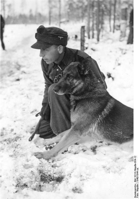 """""""Sturmmann der Waffen-SS bei der Ausbildung mit einem Schäferhund."""" Norway, 1940-1944."""