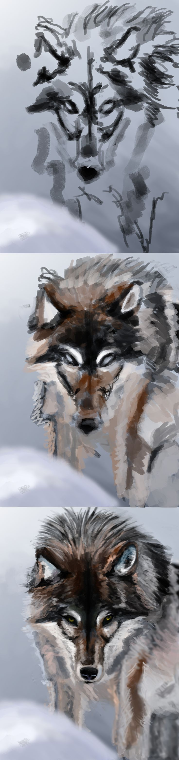 A step by step of my Wolf photo study.