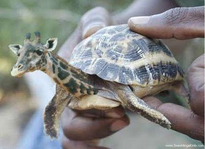 extremely funny pictures | funny_picture_funny_tortoise_vandanasanju.blogspot.com