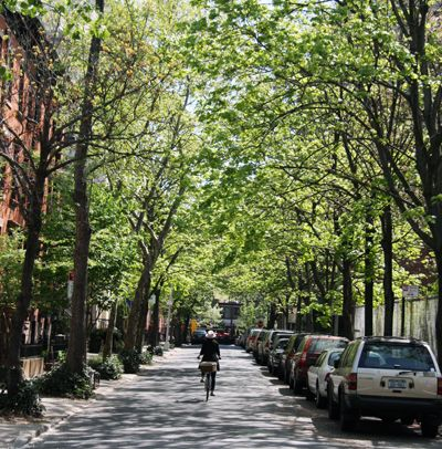 NYC tree-lined streets