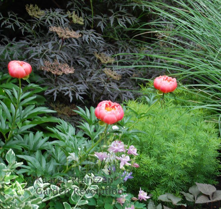 Flower Garden Ideas Illinois 153 best ❀ garden revolution. illinois ❀ images on pinterest