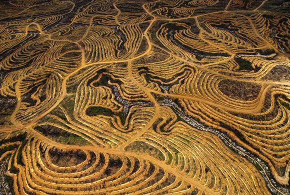 Plantatie pentru ulei de palmieri, Borneo, Indonesia