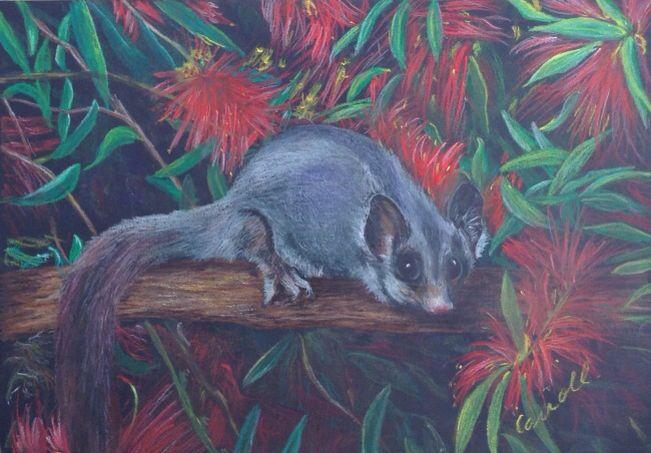 Possum, inktense drawing on black paper, Australian art
