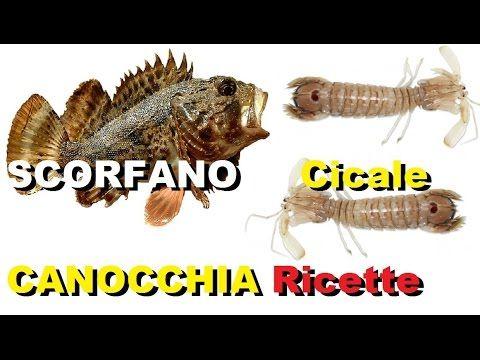 Pulire SCORFANO Cicale CANOCCHIA Ricette con lo Scorfano #fish