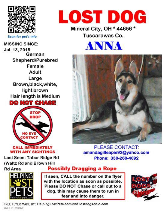 Stray Dog Rescue Lorain County Ohio