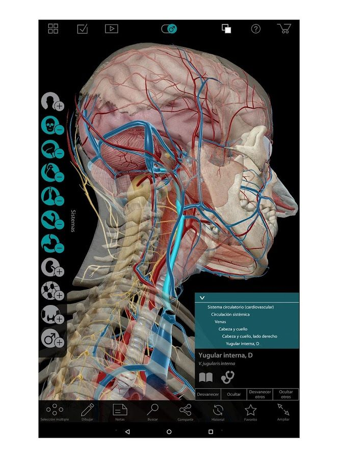 111 best Anatomía images on Pinterest | Drawings of, Human figures ...