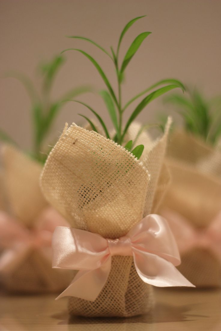 We created over 80 of these cute baby pot plant bomboniere, wrapped elegantly for a beautiful little girl's Christening. Contact us at hello@itsstyled.com.au Other colours and plant varieties coming shortly...