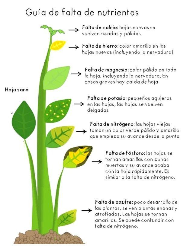 Guía de falta de nutrientes en una planta