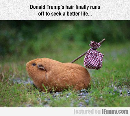 Donald Trump's Hair Finally Runs Off