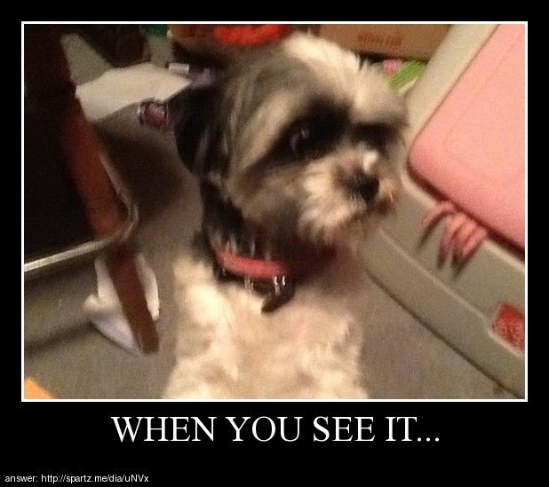 WHEN YOU SEE IT… You might freak out… http://ift.tt/16Km7SX
