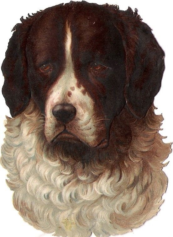Oblaten Glanzbild scrap die cut chromo Hund dog  9,7cm  head Kopf tete chien