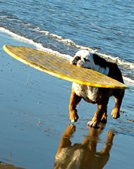 Del Mar Dog Beach San Diego has the best beaches for families and their furry friends.