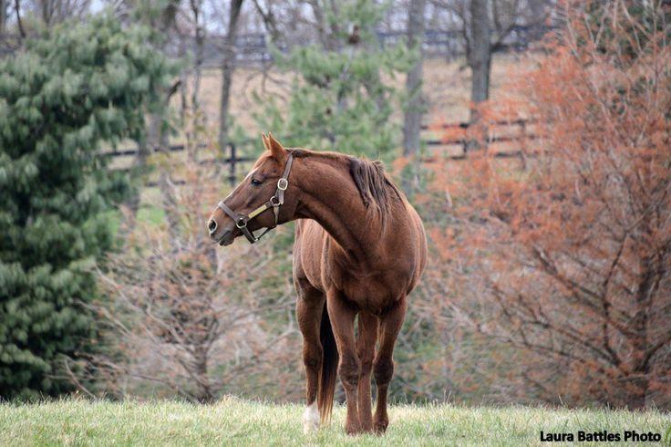 G1 Winner Tinners Way, Son Of Secretariat, Dies At 27 - Horse Racing News | Paulick Report
