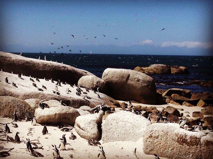 Boulders Beach - Simons Town, South Africa #travelinspiration #travelstyled #wheretonext http://www.sanparks.org/parks/table_mountain/tourism/attractions.php#boulders