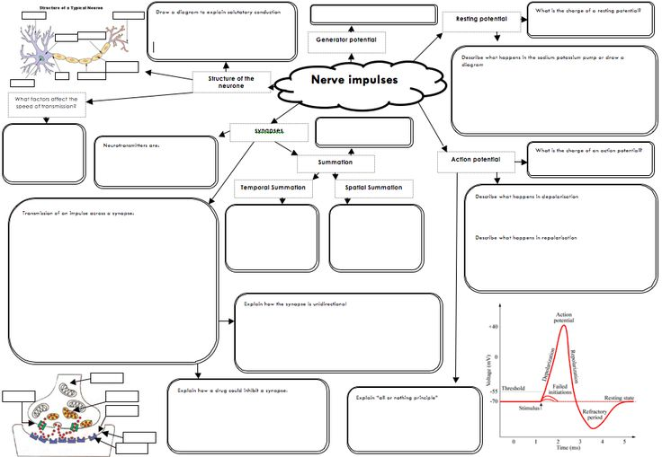 This is a great template for Concept Maps on nerves. Get
