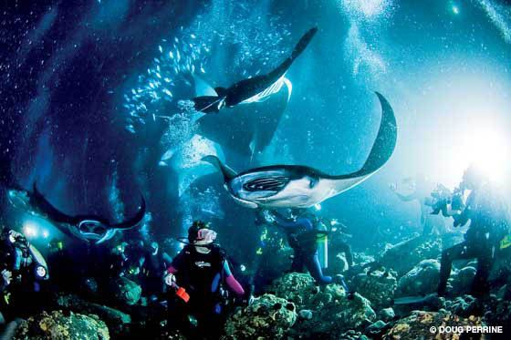 I got to go snorkeling at night with Manta Rays off Kona, Hawaii, and I will DEFINITELY do it again!