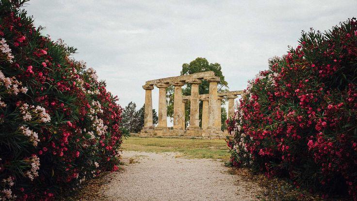 Il Tempio di Hera (Metaponto) nei pressi della Tenuta Visconti