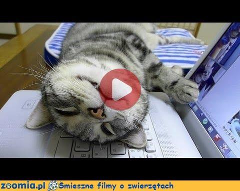 Koci sabotaż « Koty « Śmieszne filmy o zwierzętach - śmieszne koty, śmieszne psy. Zoomia.pl :: Zoomia pl