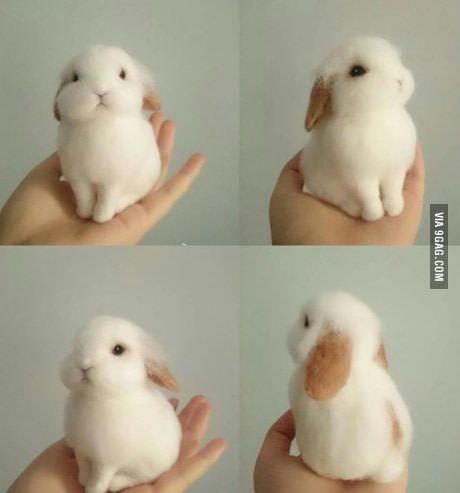Bunny perfection