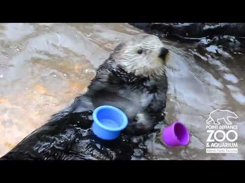 SEE THAT??!!? THAT'S OUR OTTER, PEOPLE!!! BEST OTTER IN THE STATE OF WASHINGTON!!! AND PROBABLY EVERYWHERE!!!!!!!!!