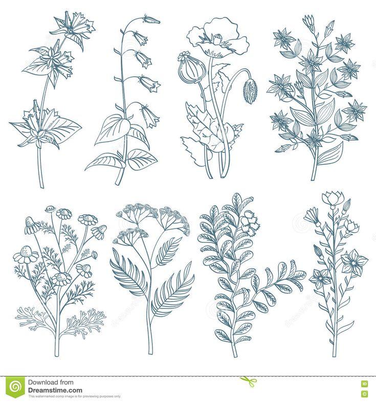 Kruiden Het Wilde Bloemen Botanische Geneeskrachtige Organische Plant Helen Vectorreeks Ter Beschikking Getrokken Stijl - Downloaden van meer dan 53 Miljoen hoge kwaliteit stock foto's, Beelden, Vectoren. Schrijf vandaag GRATIS in. Afbeelding: 73306223