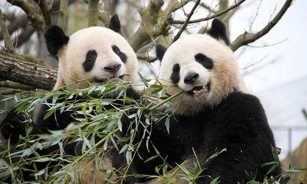 Pairi Daiza: entrées au zoo et 1 nuit en chambre Standard avec petits déjeuners au BEST WESTERN Horizon pour 2 à 4 pers.