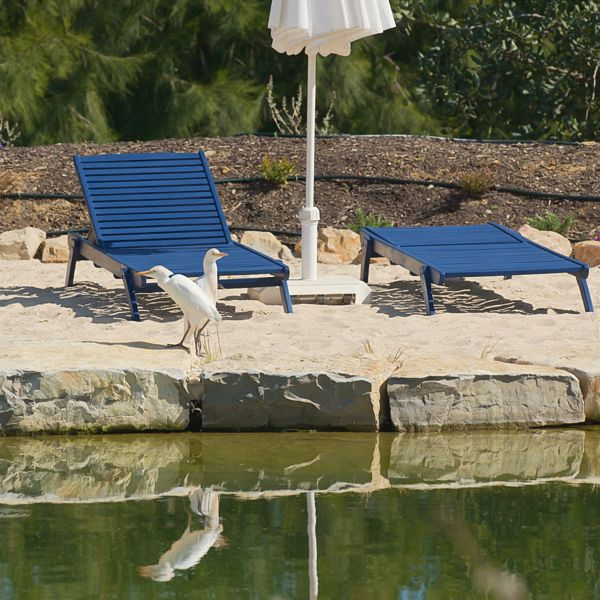 Cattle Egrets checking out the natural swimming pond; Casa Flor de Sal, holiday houses, East Algarve, Portugal