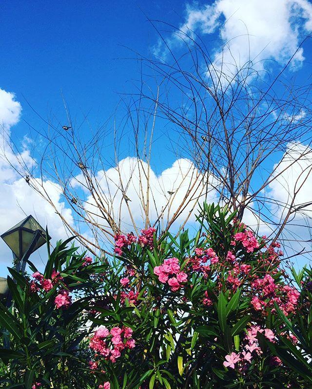 Mutlu, renkli, keyifli pazarlar arkadaşlar 💚💙🍀🌺🐝🐞🐢#happysunday#holydays#bestoftheday#ig_myshot#ig_turkey#fallowalways#andakal#landscapelovers#landscapephotography#skylovers#skyporn#sky_captures#clouds_of_our_world#cloud_skye_sunny#flowerslovers#flowerstagram#naturegram#naturalbeauty#naturephotograph#photography#photographer#instamood#instagramhub#ig_shotz#ig_asia#ig_turkey#objektifimdenyansıyanlar#kadrajımdanyansıyanlar Natural Beauty from BEAUT.E
