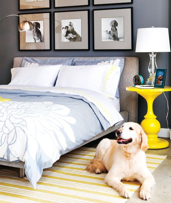 dog.Ideas, Dogs Pics, Side Tables, Beds, Colors, Blue Bedrooms, Dogs Photos, Yellow, Dogs Pictures