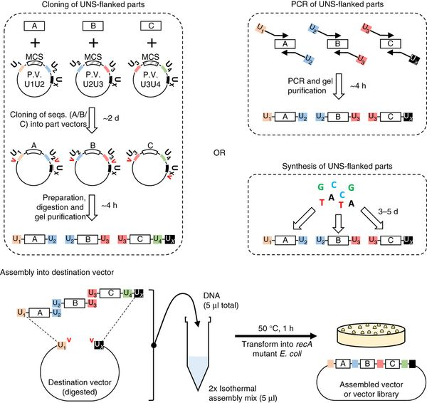 Unique nucleotide sequence–guided assembly of repetitive DNA parts for synthetic biology applications