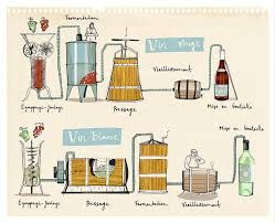 105 best images about wine on Pinterest | Different types of wine ...