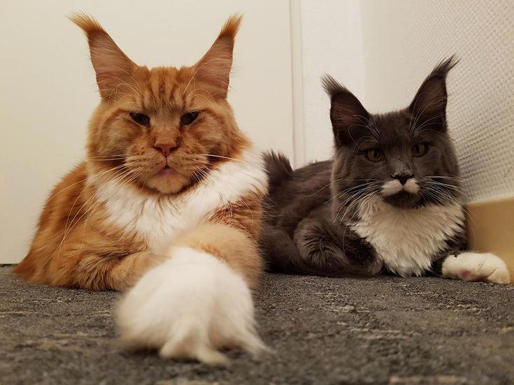 Leonidas and nemesis - http://cutecatshq.com/cats/leonidas-and-nemesis/