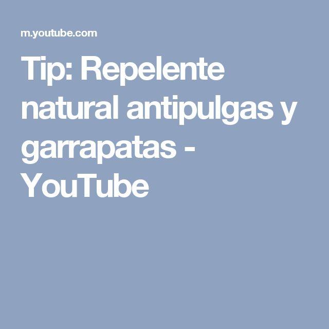 Tip: Repelente natural antipulgas y garrapatas - YouTube