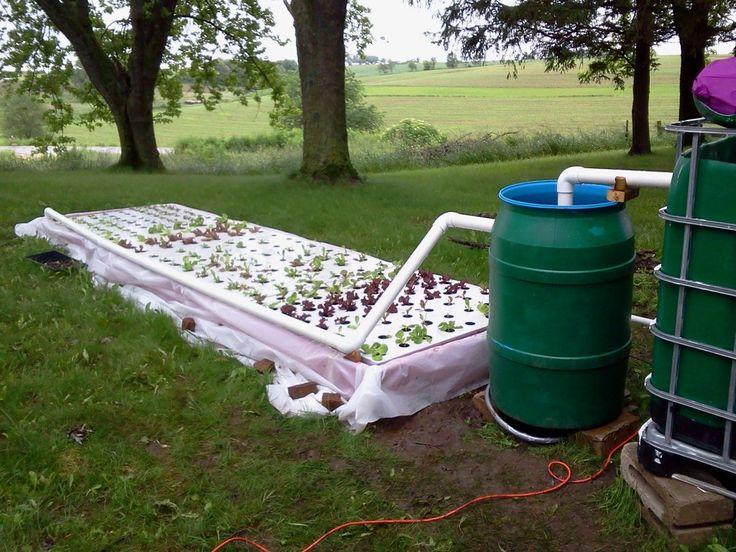 swirl filter and floating raft aquaponics