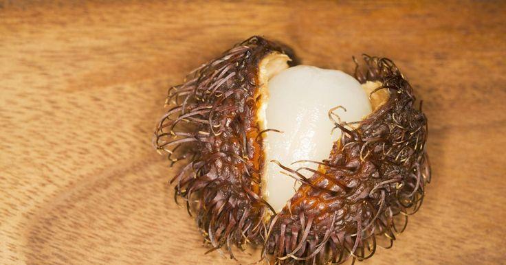 """Como cultivar um Rambutã. Rambutã, parente da lichia, é uma das frutas mais exóticas, nativa da Indonésia, Tailândia, Vietnã e das planícies da Malásia ocidental. """"Rambu"""" na língua malaia significa """"peludo"""" e """"utan"""" transforma qualquer palavra em um substantivo. Algumas pessoas chamam a fruta de """"lichia peluda"""". Hoje, rambutã é uma fruta popular não apenas entre os ..."""