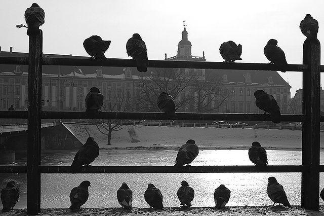 Poland, Wroclaw | Poland www.osiowy.pl | Zbigniew Osiowy | Flickr