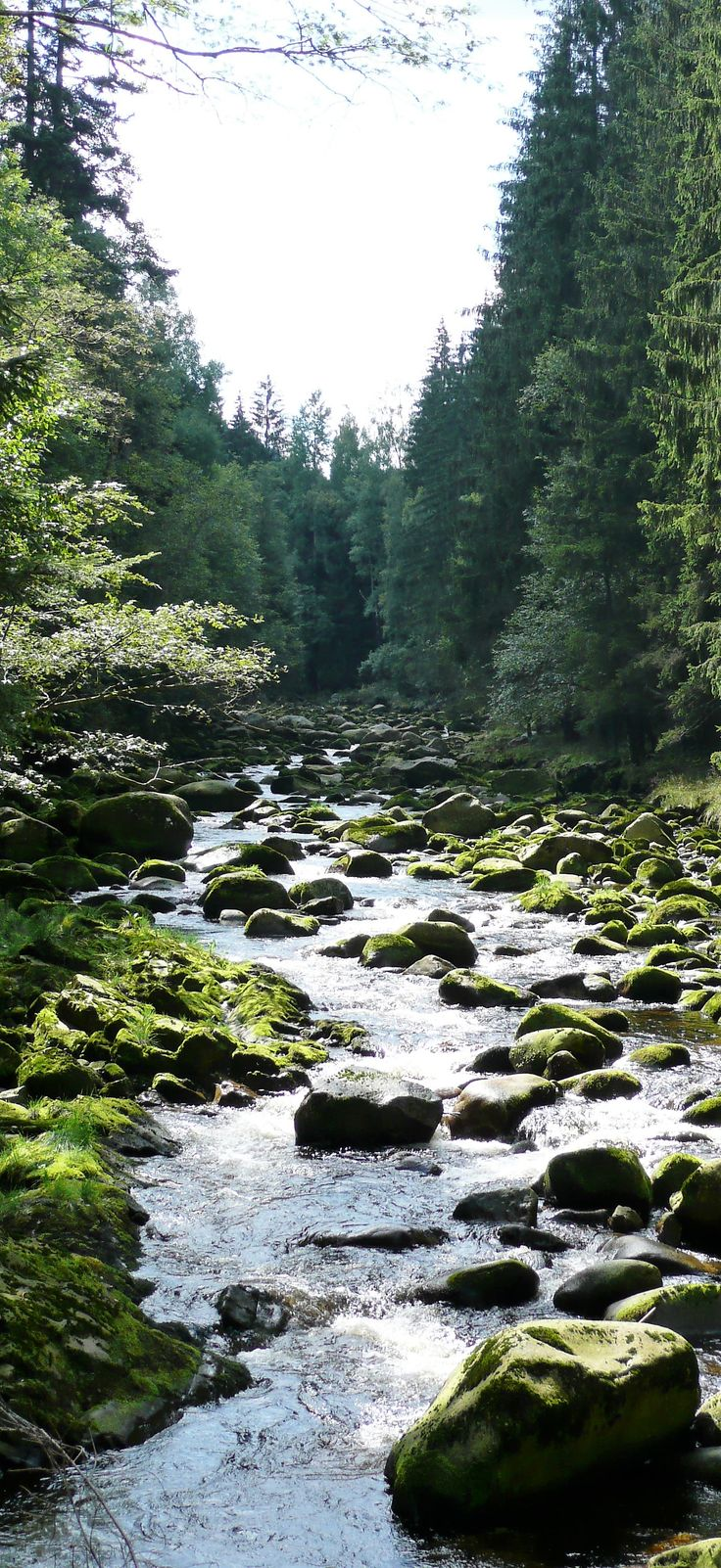 Böhmerwald