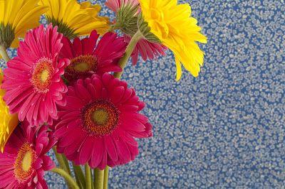 22 postales de flores para escribir tus propios mensajes... | Banco de Imágenes 22 postales de flores para escribir tus propios mensajes...         |          Banco de Imágenes