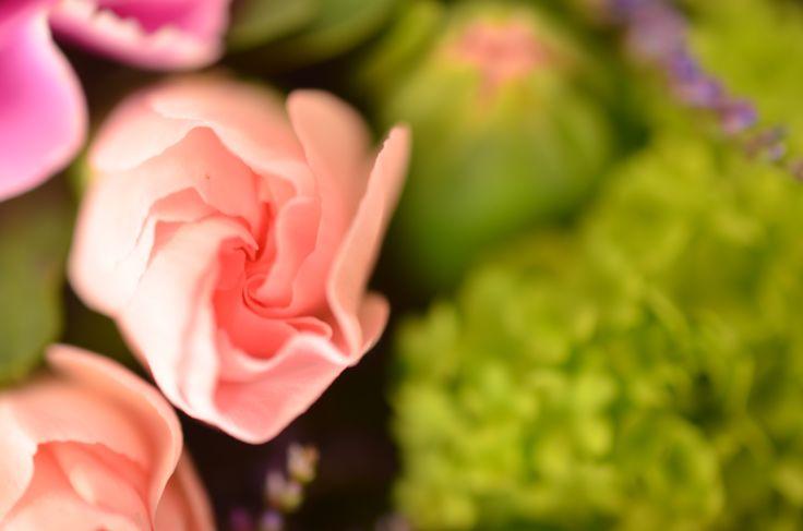 """""""Schön, dass es Dich gibt"""" #freude #verschenken #geschenk #nelke #freundschaft #rosa #strauss #fruehling #spring #schneeball #rose #gruen #blume2000 #blume2000de // Lieferbar bis zum 29.04.2015"""