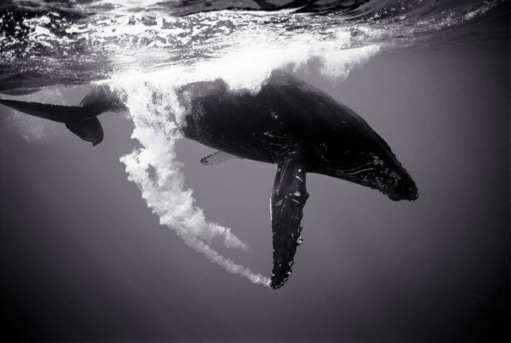 Wayne Levin Photography.