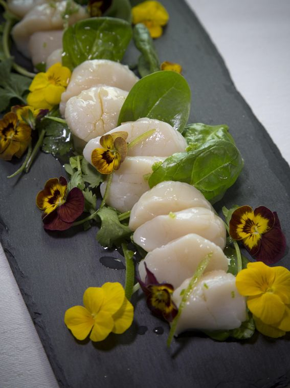 Scallop Ceviche with Lime, Maple and Pink Peppercorns - LoveMaple