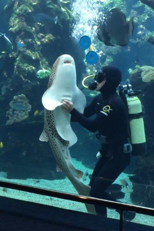 This Happy Shark Getting A Belly Rub Will Make Your Whole Day