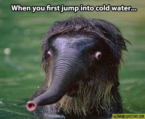 Jumping into cold water…
