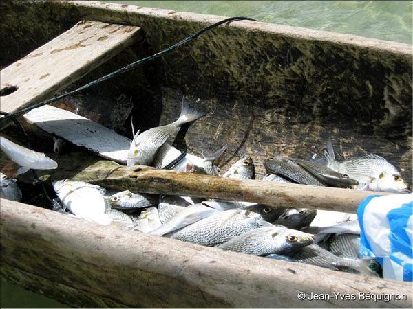 Port Gentil 7 pêche.jpg