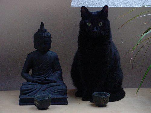 Funny Cats Photos / Gatti Divertenti | Tante foto divertenti di gatti. A lot of funny cats photos.