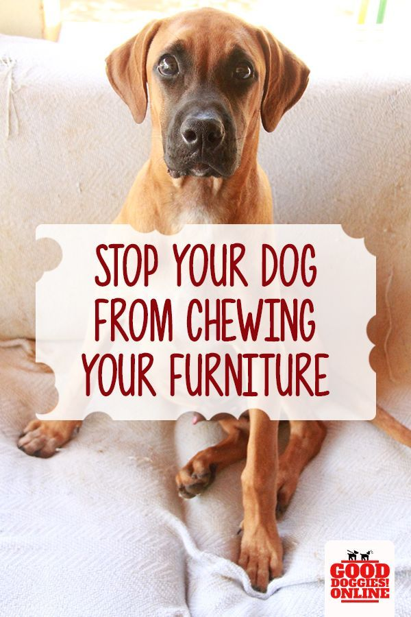 Easy Ways On How To Stop A Dog From Chewing On Furniture Dog