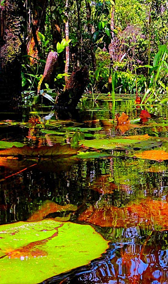 Theme: Children of the Brazilian Amazon Rain Forests
